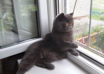 сетка анти-кошка